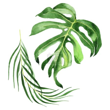 Photo pour Exotic tropical hawaiian green palm leaves isolated on white. Watercolor background set. - image libre de droit