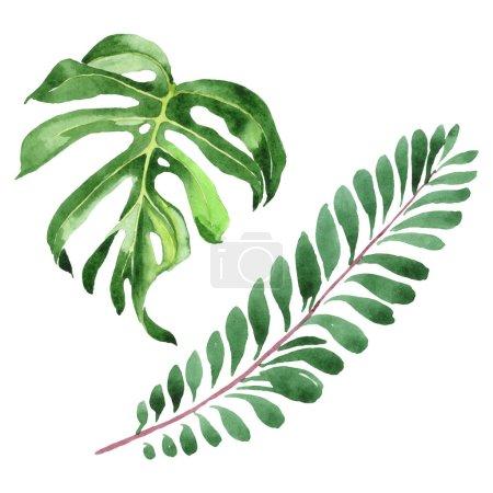Photo pour Feuilles vertes hawaïennes exotiques de palmier d'hawaïol d'isolement sur le blanc. Ensemble de fond d'aquarelle. - image libre de droit