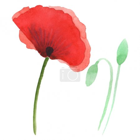 Photo pour Red poppies isolated on white. Watercolor background illustration set. - image libre de droit