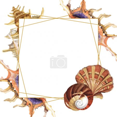 Photo for Tropical seashells isolated on white. Watercolor background illustration set. Frame with copy space. - Royalty Free Image