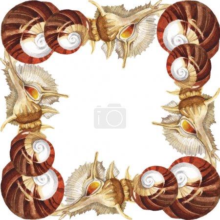 Photo pour Coquillages tropicaux isolés sur blanc. Ensemble d'illustration de fond aquarelle. Cadre avec espace de copie . - image libre de droit
