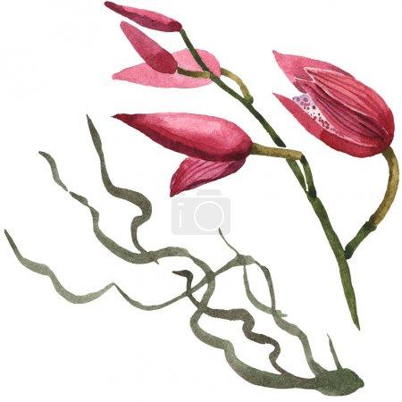 Foto de Orquídeas Marsala aisladas sobre blanco. Conjunto de ilustraciones de fondo de acuarela. - Imagen libre de derechos