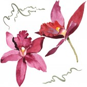 "Постер, картина, фотообои ""Marsala orchids isolated on white. Watercolor background illustration set. """