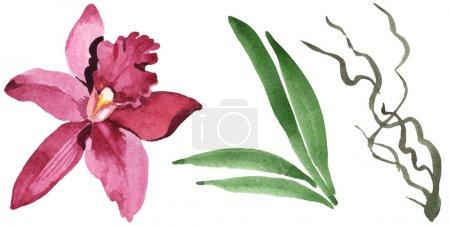 Photo pour Fleur d'orchidée de Marsala avec des lames vertes d'isolement sur le blanc. Ensemble d'illustration de fond d'aquarelle. - image libre de droit
