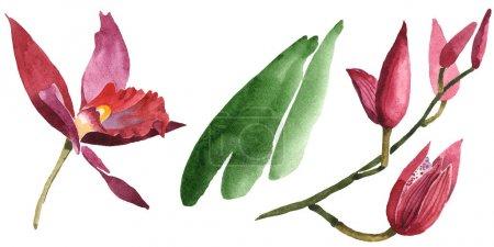 Photo pour Orchidées de Marsala avec des lames vertes d'isolement sur le blanc. Ensemble d'illustration de fond d'aquarelle. - image libre de droit