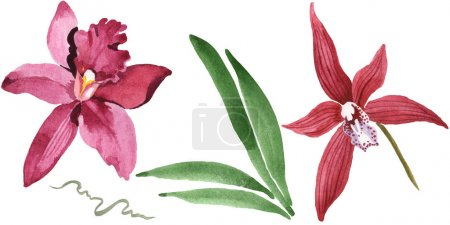 Marsala orchids with green leaves isolated on white. Watercolor background illustration set.
