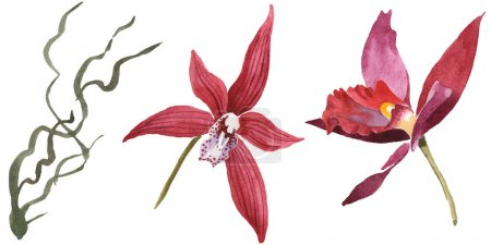Photo for Marsala orchids isolated on white. Watercolor background illustration set. - Royalty Free Image