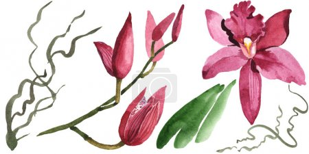 Foto de Marsala orchids with green leaves isolated on white. Watercolor background illustration set. - Imagen libre de derechos