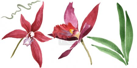 Photo for Marsala orchids with green leaves isolated on white. Watercolor background illustration set. - Royalty Free Image