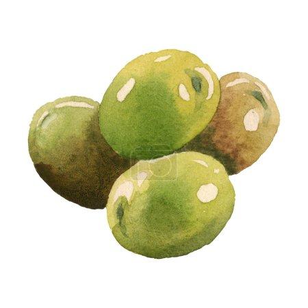 Photo pour Olives fraîches d'isolement sur les éléments blancs d'illustration de fond d'aquarelle - image libre de droit