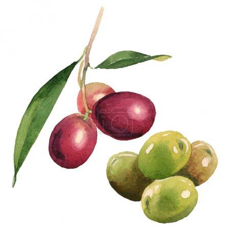 Photo pour Olives fraîches avec des lames vertes d'isolement sur les éléments blancs d'illustration d'aquarelle - image libre de droit