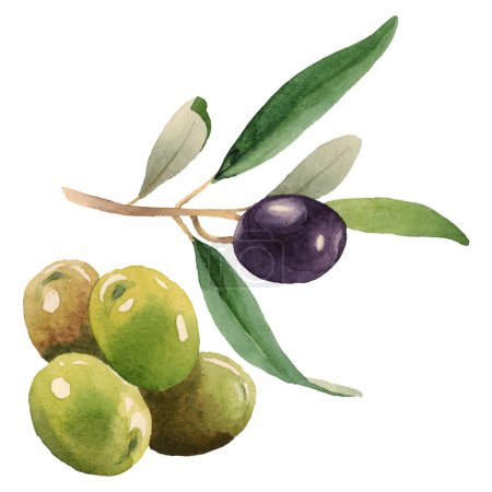 Foto de Fresh olives with green leaves isolated on white watercolor background illustration elements - Imagen libre de derechos