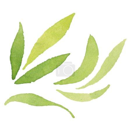 Foto de Hojas de color verde oliva aisladas sobre elementos de ilustración de fondo de acuarela blanca. - Imagen libre de derechos