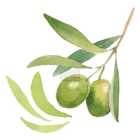 Photo for Fresh olives with green leaves isolated on white watercolor background illustration elements - Royalty Free Image