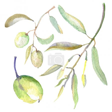Photo pour Olive branches with green fruit and leaves. Watercolor background illustration set. - image libre de droit