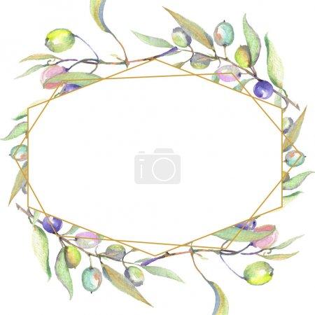 Photo pour Branches d'olivier avec le fruit vert et feuilles d'isolement sur le blanc. Ensemble d'illustration de fond d'aquarelle. Ornement de cadre avec l'espace de copie. - image libre de droit
