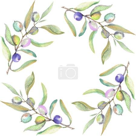 Olivenzweige mit grünen Früchten und Blättern isoliert auf weiß. Aquarell Hintergrundillustration Set. Rahmenornament mit Kopierraum.