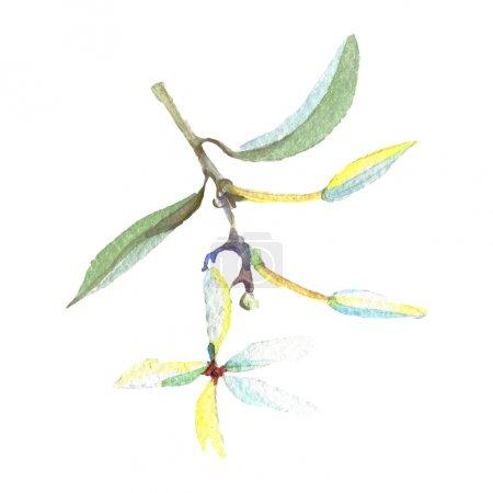 Foto de Olive branch with green leaves isolated on white. Watercolor background illustration set. - Imagen libre de derechos