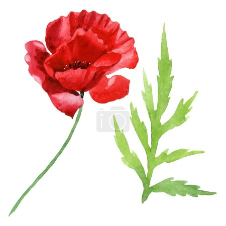 Photo pour Red poppy flower with green leaf isolated on white. Watercolor background illustration set. - image libre de droit