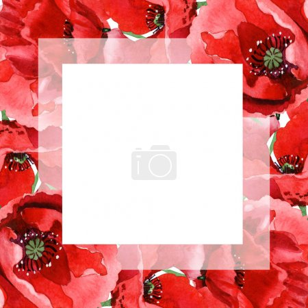 Photo pour Coquelicots rouges isolés sur blanc. Ensemble d'illustration de fond aquarelle. Ornement de cadre avec espace de copie . - image libre de droit