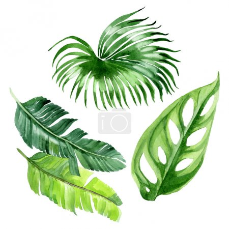 Photo for Exotic tropical hawaiian palm tree leaves isolated on white. Watercolor background illustration set. - Royalty Free Image