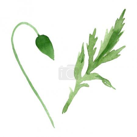 Photo pour Bouton de fleur de pavot avec la feuille verte d'isolement sur le blanc. Ensemble d'illustration de fond d'aquarelle. - image libre de droit