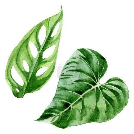 Foto de Exóticas hojas tropicales de palmeras hawaianas aisladas en blanco. Conjunto de ilustraciones de fondo de acuarela. - Imagen libre de derechos