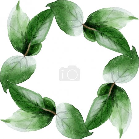 Foto de Green camellia leaves isolated on white. Watercolor background illustration set. Frame border ornament with copy space. - Imagen libre de derechos