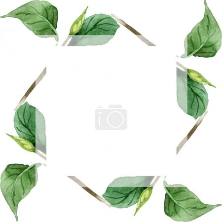 Green camellia leaves isolated on white. Watercolor background illustration set. Frame border ornament with copy space.