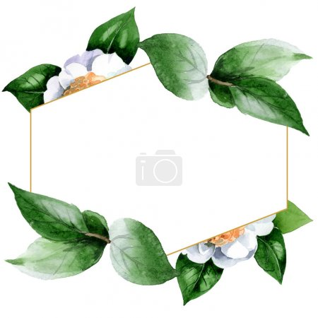 Foto de White camellia flowers with green leaves isolated on white. Watercolor background illustration set. Frame border ornament with copy space. - Imagen libre de derechos