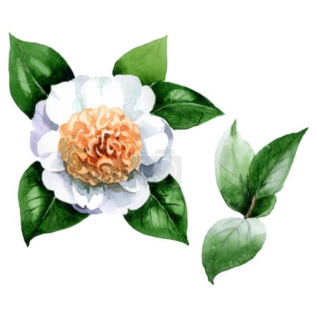 Photo for White camellia flower with green leaves isolated on white. Watercolor background set. - Royalty Free Image