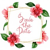 """Постер, картина, фотообои """"Pink camellia flowers with green leaves isolated on white. Watercolor background illustration set. Frame border ornament with save the date lettering."""""""