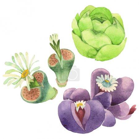 Photo pour Fleur botanique florale succulente. Fleur sauvage de neige sauvage de feuille de source d'isolement. Ensemble d'illustration de fond d'aquarelle. Aquarelle de mode de dessin d'aquarelle d'aquarelle d'aquarelle. Élément isolé d'illustration de cactus. - image libre de droit