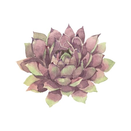 Photo for Succulent floral botanical flower. Wild spring leaf wildflower isolated. Watercolor background illustration set. Watercolour drawing fashion aquarelle isolated. Isolated cacti illustration element. - Royalty Free Image