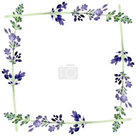 Violet lavender floral botanical flower. Watercolor background illustration set. Frame border ornament square.