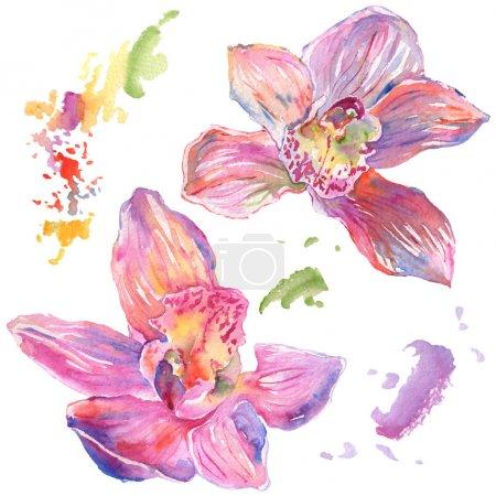 Photo pour Fleurs botaniques florales d'orchidée. Feuille sauvage de printemps fleur sauvage isolée. Ensemble d'illustration de fond aquarelle. Aquarelle dessin mode aquarelle isolé. Élément d'illustration d'orchidées isolées . - image libre de droit