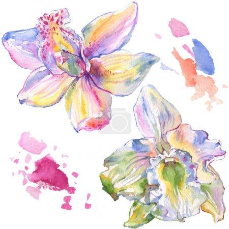Foto de Flores botánicas florales de orquídeas. Hoja de primavera silvestre wildflower aislado. Conjunto de ilustraciones de fondo de acuarela. Acuarela dibujando moda acuarela aislada. Elemento de ilustración de orquídeas aisladas. - Imagen libre de derechos