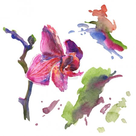 Photo for Orchid floral botanical flowers. Wild spring leaf wildflower isolated. Watercolor background illustration set. Watercolour drawing fashion aquarelle isolated. Isolated pattern illustration element. - Royalty Free Image