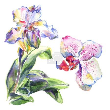 Orquídea flores botánicas florales. Conjunto de ilustración de fondo acuarela. Elemento de ilustración de patrón aislado .