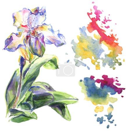 Photo pour Fleurs botaniques florales d'orchidée. Feuille sauvage de printemps fleur sauvage isolée. Ensemble d'illustration de fond aquarelle. Aquarelle dessin mode aquarelle isolé. Élément d'illustration de motif isolé . - image libre de droit