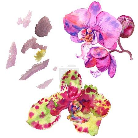Foto de Flor botánica floral de orquídea. Hoja de primavera silvestre wildflower aislado. Conjunto de ilustraciones de fondo de acuarela. Acuarela dibujando moda acuarela aislada. Elemento de ilustración de orquídeas aisladas. - Imagen libre de derechos