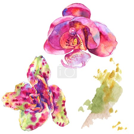 Photo pour Fleur botanique florale d'orchidée. Fleur sauvage de neige sauvage de feuille de source d'isolement. Ensemble d'illustration de fond d'aquarelle. Aquarelle de mode de dessin d'aquarelle d'aquarelle d'aquarelle. Élément d'illustration d'orchidées d'isolement. - image libre de droit
