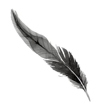 Photo pour Plume d'oiseau de l'aile isolée. Ensemble d'illustration de fond aquarelle. Aquarelle dessin mode aquarelle isolé. Élément d'illustration de plumes isolées . - image libre de droit
