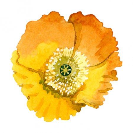 Photo pour Fleurs botaniques florales de pavot jaune. Feuille de printemps sauvage fleur sauvage. Ensemble d'illustration de fond aquarelle. Aquarelle dessin mode aquarelle. Élément d'illustration de coquelicots isolés . - image libre de droit