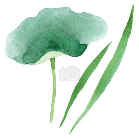 Photo for Blue lotus floral botanical flowers. Wild spring leaf wildflower. Watercolor background illustration set. Watercolour drawing fashion aquarelle. Isolated nelumbo illustration element. - Royalty Free Image