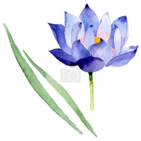 Photo pour Fleurs botaniques florales de lotus bleu. Fleur sauvage sauvage de feuille de source. Ensemble d'illustration de fond d'aquarelle. Aquarelle de dessin à l'aquarelle. Élément d'illustration de nelumbo d'isolement. - image libre de droit