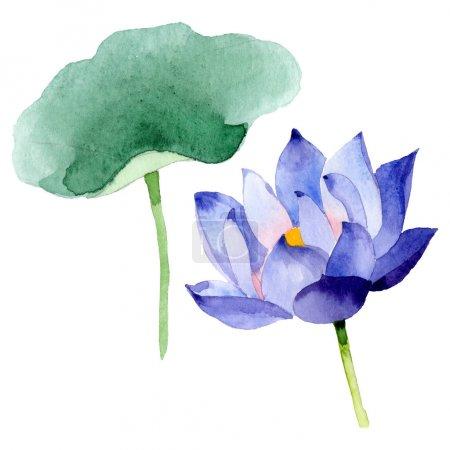 Photo pour Fleurs botaniques florales de lotus bleu. Feuille de printemps sauvage fleur sauvage. Ensemble d'illustration de fond aquarelle. Aquarelle dessin mode aquarelle. Élément d'illustration nelumbo isolé . - image libre de droit