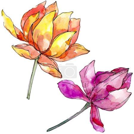 Photo pour Fleurs botaniques florales de lotus. Fleur sauvage de neige sauvage de feuille de source d'isolement. Ensemble d'illustration de fond d'aquarelle. Aquarelle de mode de dessin d'aquarelle d'aquarelle d'aquarelle. Élément d'illustration de nelumbo d'isolement. - image libre de droit