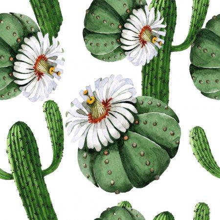 Photo pour Fleurs botaniques florales de cactus vert. Fleurs sauvages printanières sauvages. Ensemble d'illustration aquarelle. Aquarelle dessin mode aquarelle. Modèle de fond sans couture. Texture d'impression papier peint tissu . - image libre de droit