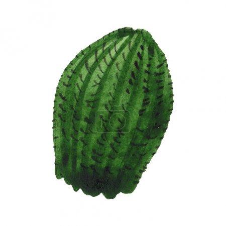 Foto de Flor botánica floral de cactus verde. Flor silvestre de primavera aislada. Conjunto de ilustraciones de fondo de acuarela. Acuarela dibujando moda acuarela aislada. Elemento de ilustración de cactus aislado. - Imagen libre de derechos